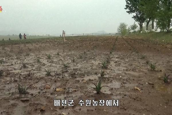 Corea del Norte sufre la peor sequía en 102 años