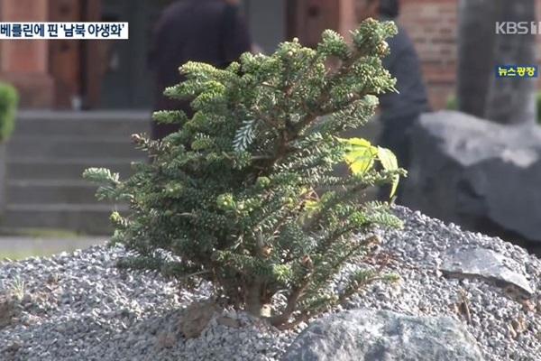 A Berlin, les deux Corées réunifiées à travers un jardin de fleurs sauvages