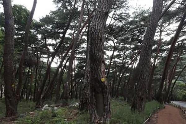 За 19 лет площадь лесов в Северной Корее сократилась на 233 тыс. гектаров