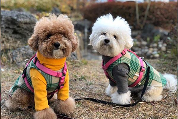 Einer von fünf Haushalten in Seoul lebt mit Haustier