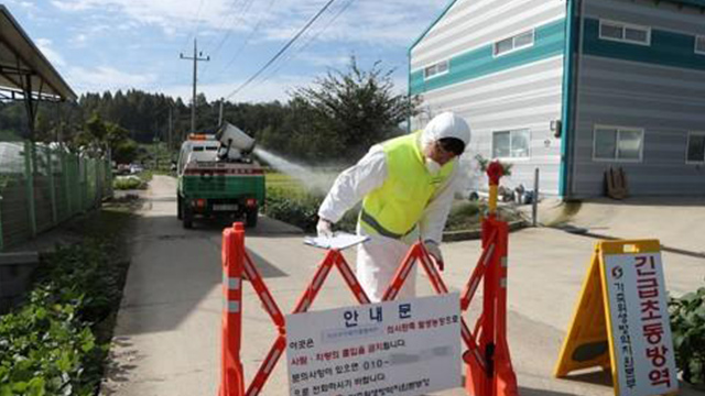 S. Korea's 1st Ever ASF Case Confirmed in Gyeonggi Province