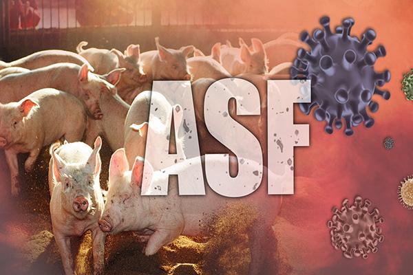 Corea del Sur confirma el primer caso de peste porcina africana