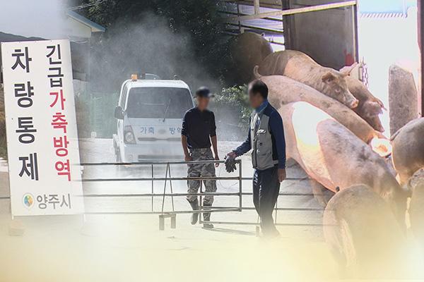통일부, 북한에 '아프리카돼지열병' 통지문 전달