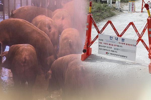 كوريا تعلن عن الحالة الثانية المؤكدة من حمى الخنازير الأفريقية