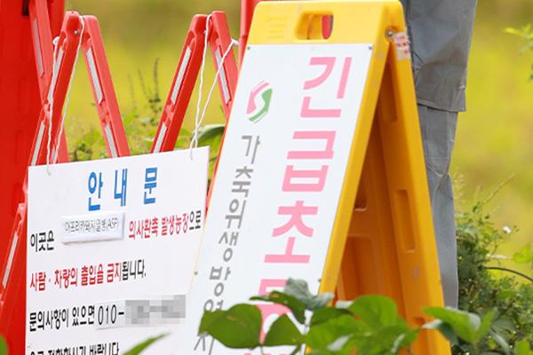 Kasus Kedua Flu Babi Afrika Dikonfirmasi di Yeoncheon, Provinsi Gyeonggi