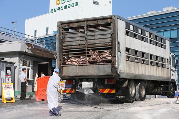 Dỡ bỏ lệnh cấm di chuyển với các trang trại lợn