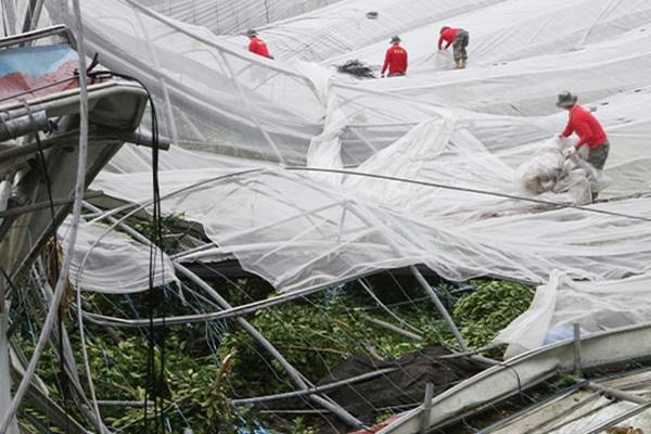 Командование сил ООН и военные КНДР вместе ликвидировали последствия тайфуна «Линлин»