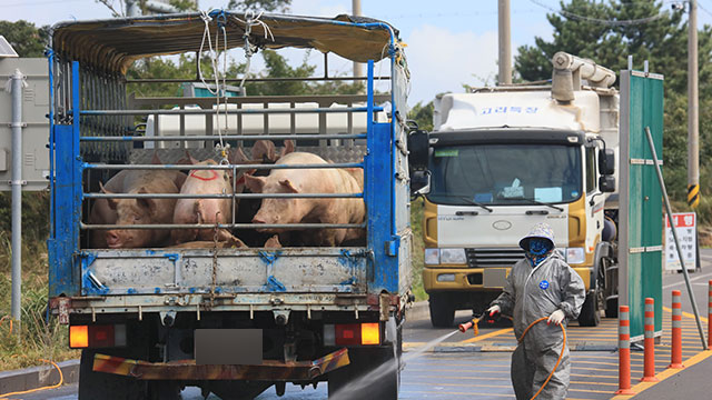 Two More Suspected Cases of African Swine Fever Reported in Paju