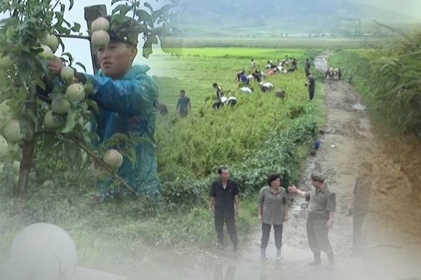 الحصاد في كوريا الشمالية يسجل أقل مستوى له منذ خمس سنوات