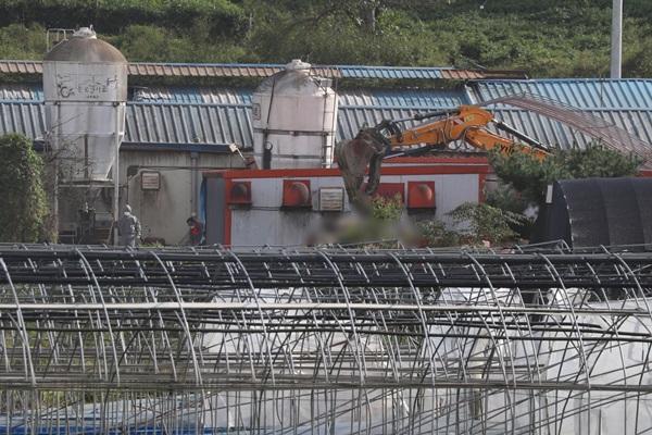 Thêm hai trang trại nghi nhiễm dịch tả lợn châu Phi
