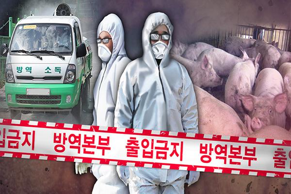 اكتشاف حالة إصابة أخرى من حمى الخنازير الإفريقية في مقاطعة كيونغ كي