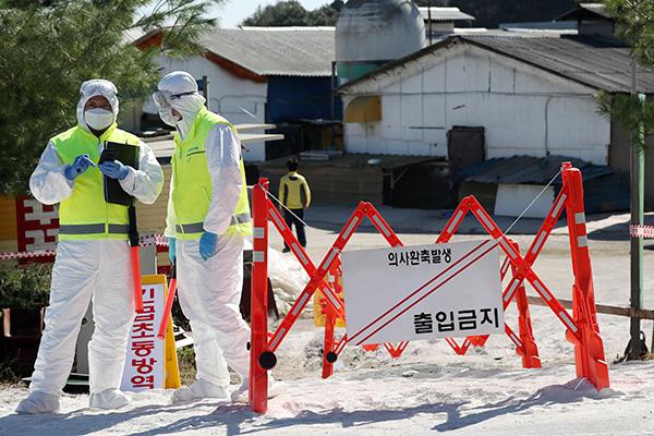 Peternakan Babi di Gimpo, Provinsi Gyeonggi Dicurigai Terinfeksi Flu Babi Afrika