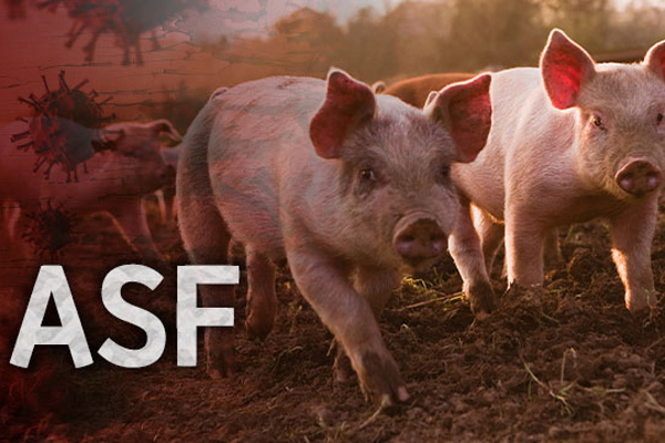 South Korea Confirms Two More African Swine Fever Cases