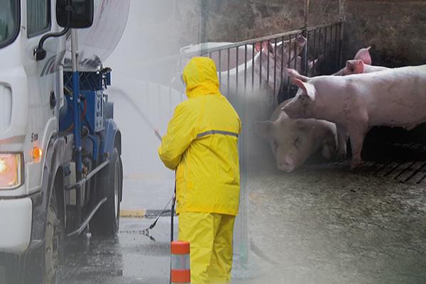Prohíben trasladar ganado en Yeoncheon al detectar otro caso de PPA