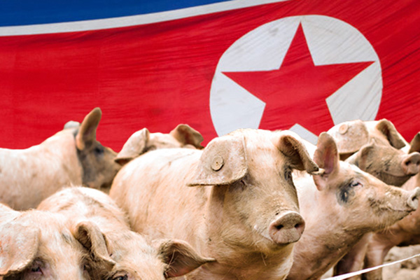 S. Korea to Hunt Wild Boars Near Inter-Korean Border to Counter Swine Fever