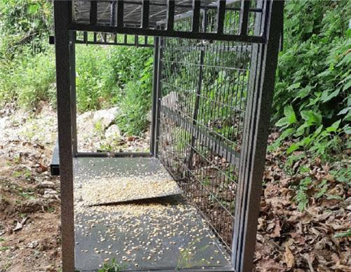 Military, Civilian Hunters Pursue Wild Boars to Contain ASF
