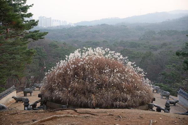 고궁·조선왕릉 단풍 절정은 11월초…문화행사 풍성