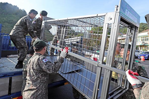 민관군포획팀, 48시간 동안 야생멧돼지 126마리 잡아