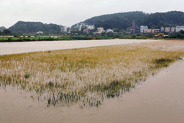 Расширился список регионов, пострадавших от тайфуна «Митаг»