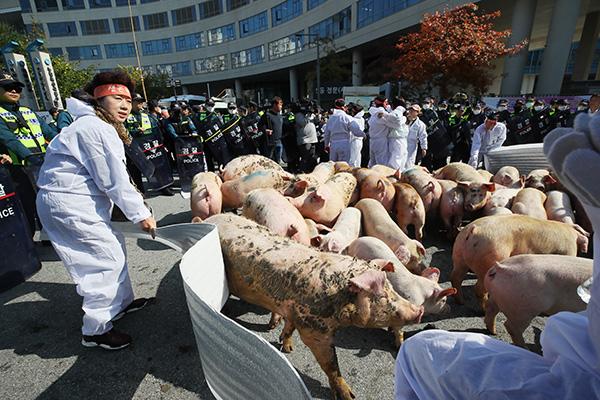 В РК продолжается карантин в связи с африканской чумой свиней
