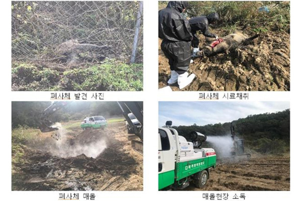 S. Korea Confirms 11th Case of African Swine Fever in Wild Boar