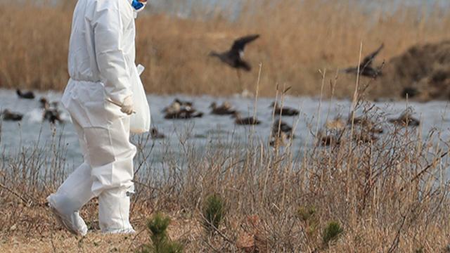 نتائج سلبية لاختبارات حالة مشتبه في إصابتها بأنفلونزا الطيور