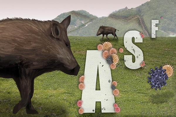 Всемирная организация здравоохранения животных призвала КНДР представить данные по AFS