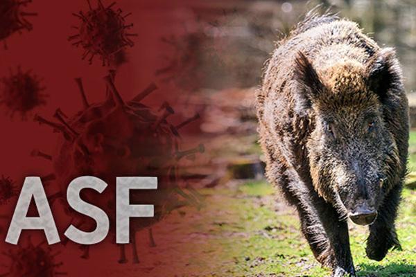 철원, 파주 멧돼지 폐사체에서 ASF 바이러스 검출..지금까지 22건