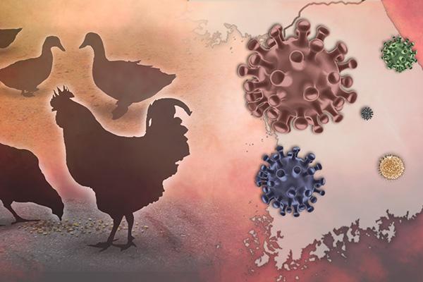 鳥インフルエンザ発生で ハンガリー産の鶏肉輸入を停止