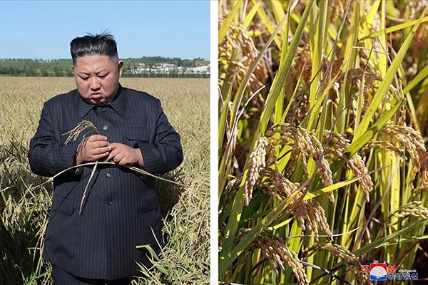북한, 식량난 속 국가수매 독려…