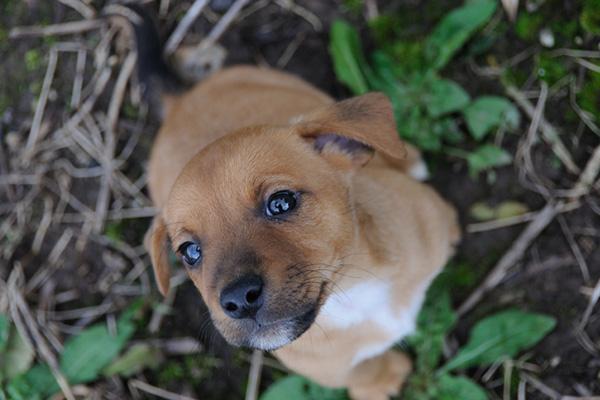 Uno de cada cinco hogares seulitas posee una mascota
