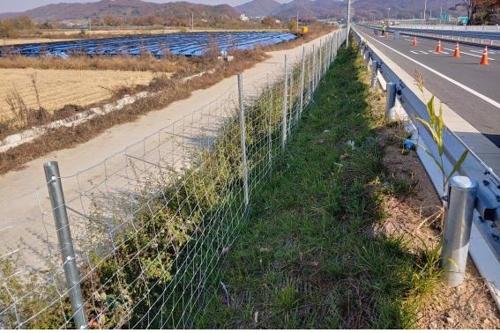 파주~철원 간 울타리 설치 완료...멧돼지 집중 포획 실시