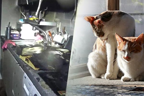 반려동물 원인 화재 '급증'…집 지키던 고양이가 방화범