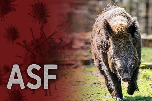 2 More Wild Boars Infected with ASF in Cheorwon
