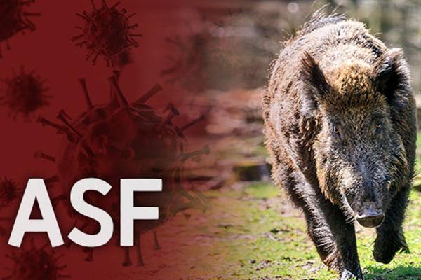 경기 연천군 야생멧돼지 폐사체에서 ASF 바이러스 검출…총 62건