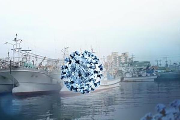 كوريا تعيد مواطنيها من سفينة الرحلات البحرية اليابانية المصابة بفيروس كورونا-19