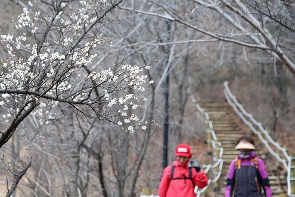 Hàn Quốc vừa trải qua mùa đông ấm áp nhất trong lịch sử
