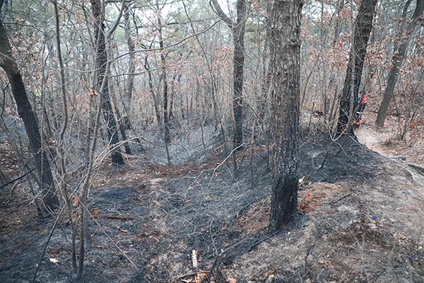 Hàn Quốc hứng chịu đợt hanh khô kéo dài