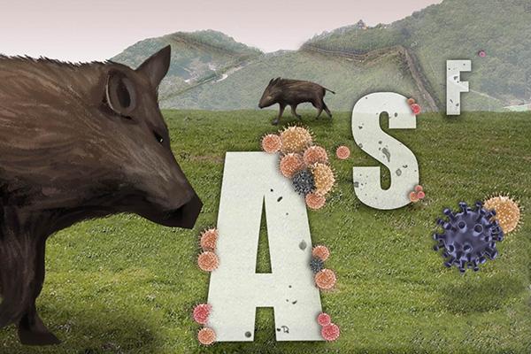 La peste porcina llegó al Sur por la zona fronteriza intercoreana