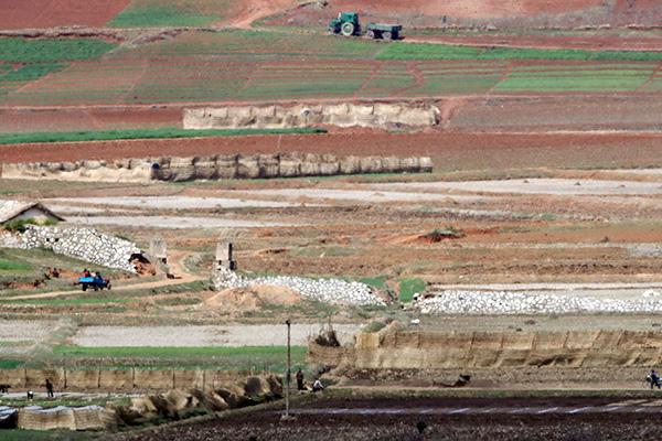 Corée du Nord : 860 000 tonnes de céréales devraient manquer cette année