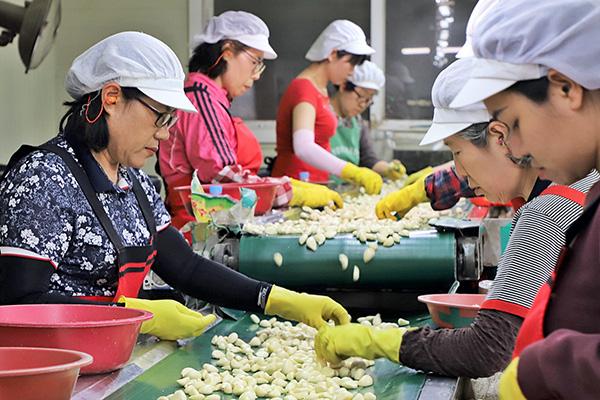 과잉 생산에 남아도는 정부 비축 마늘…2000톤 수출
