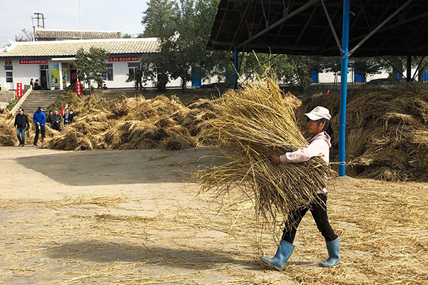 N. Korea Imported Five Years Worth of Grain from Russia in April