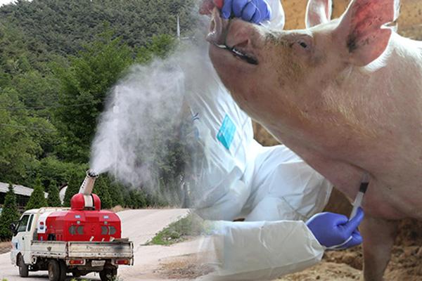 지난달 아프리카돼지열병 발병 24건...3개월 연속 계속 감소