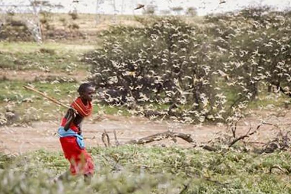 Südkorea unterstützt von Heuschreckenplage betroffene Länder mit vier Millionen Dollar