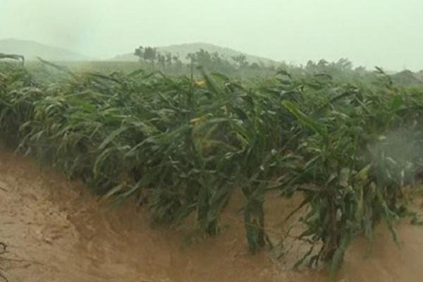 북한도 18일째 끝없는 장마…최대 쌀 생산지에 '무더기 비'