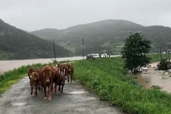 Las lluvias torrenciales dejan 31 muertos y 11 desaparecidos en Corea