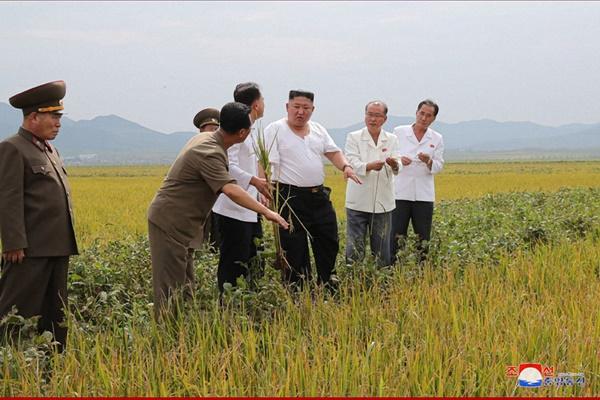"""북한, 수해 속 농작물 증산 골몰…""""쌀독 넘쳐야 자력부강 활로"""""""