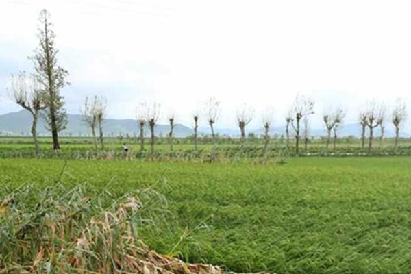 FAO tiếp tục chỉ định Bắc Triều Tiên là nước cần hỗ trợ lương thực từ bên ngoài