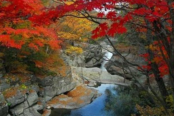Осеннее окрашивание листьев деревьев Танпхун начнётся с гор Чирисиан