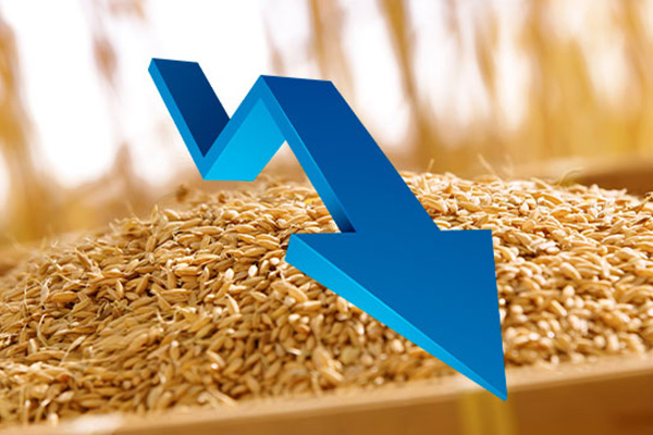 Потребление риса в РК в 2020 году сократилось до минимума